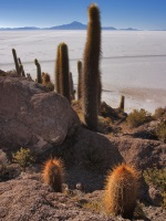 Kníže kaktusů_final